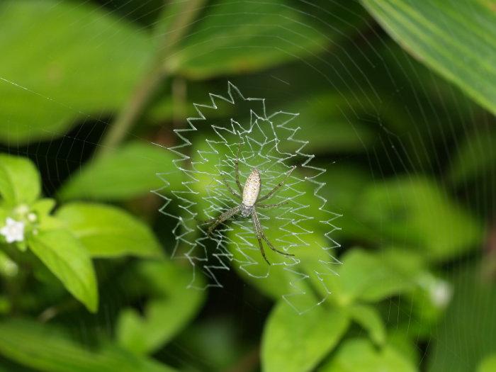 何蜘蛛?_c0116915_23242491.jpg