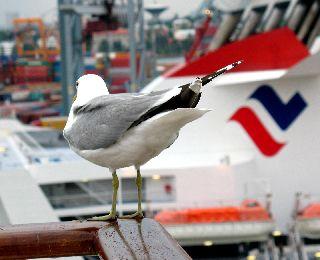 船の旅 (6月21日) ヘルシンキ  ①_e0098241_16182250.jpg