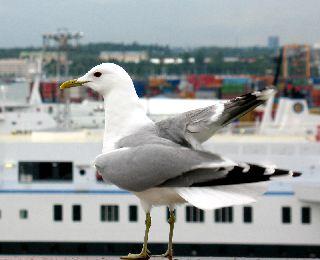 船の旅 (6月21日) ヘルシンキ  ①_e0098241_1618457.jpg