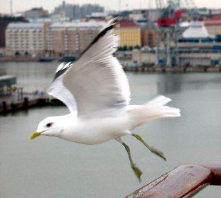 船の旅 (6月21日) ヘルシンキ  ①_e0098241_16185855.jpg