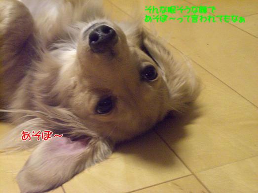b0115642_7183998.jpg