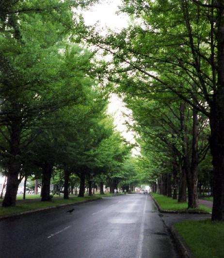 北海道の旅 5  2020-07-18 00:00_b0093754_23425347.jpg