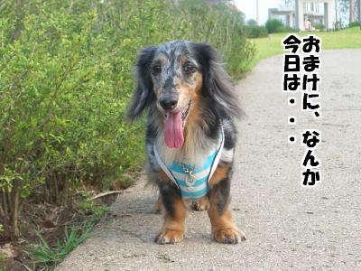 d0020869_1913760.jpg