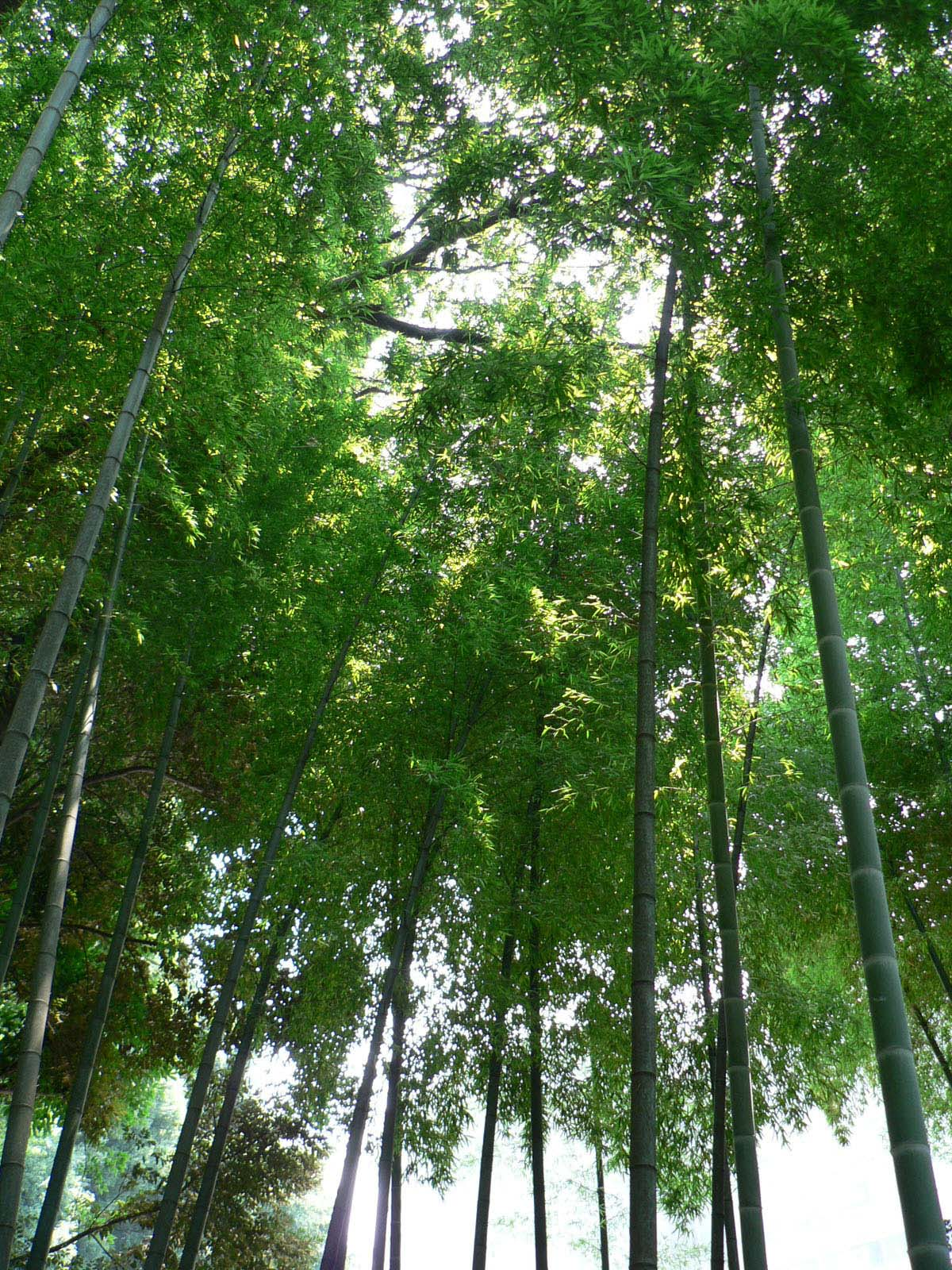 下山稲荷神社_e0123189_11111928.jpg