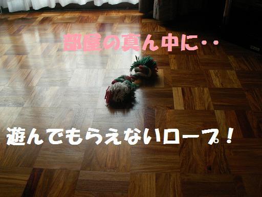 a0037298_8352396.jpg