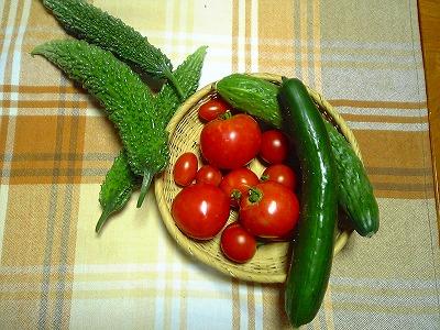 今年の夏野菜_c0060919_20243892.jpg