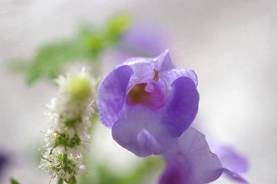 自然の恵み_c0093830_22291966.jpg