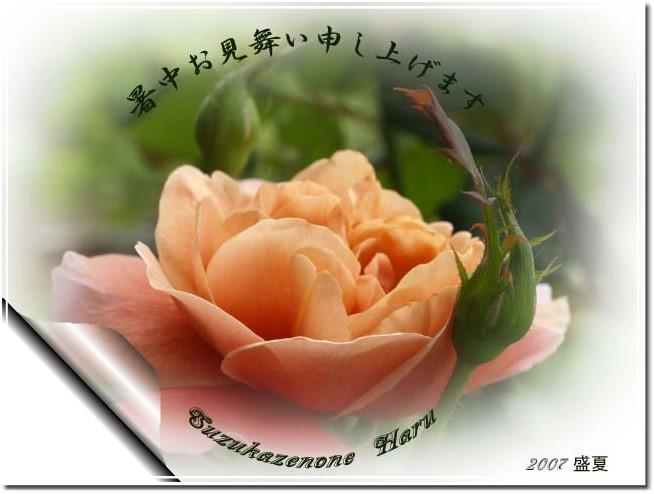 f0103534_2354359.jpg