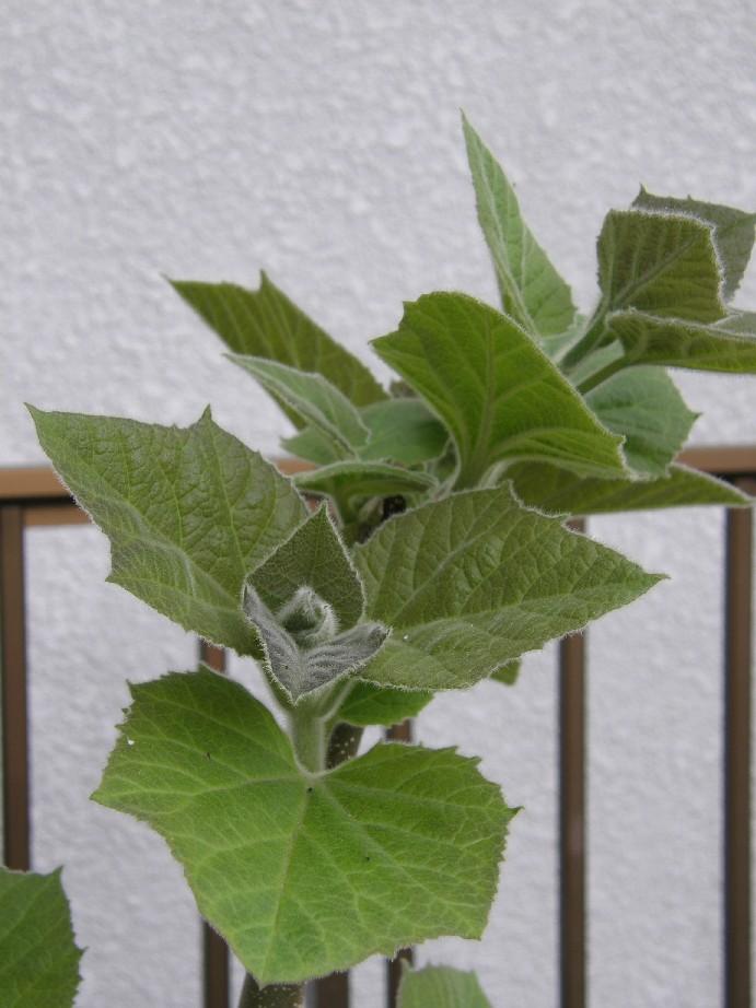 名前不明の植物_f0128542_23454061.jpg