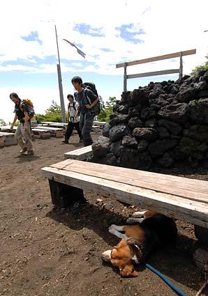 富士山のハナちゃん その2_a0070350_2033311.jpg