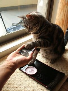 ネコ、おかわりをする(動画)_b0114004_2215062.jpg