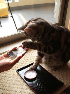 ネコ、おかわりをする(動画)_b0114004_222370.jpg