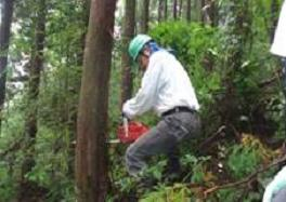 こうち森林救援隊活動報告 【第4回】_a0051612_672429.jpg