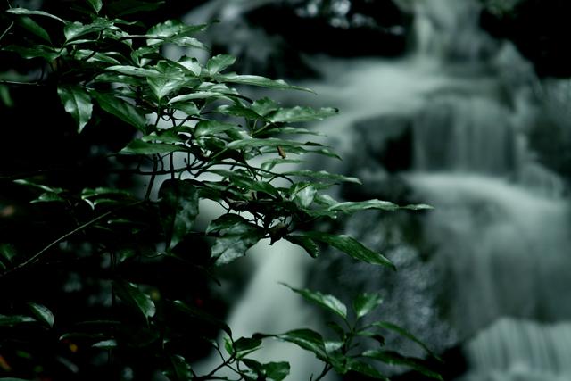 渓流の小さな滝_d0074828_012155.jpg