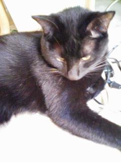 猫_b0072729_15144665.jpg