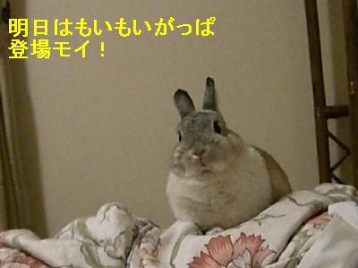 f0104057_2013279.jpg
