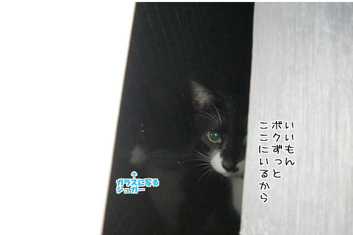 f0142061_6231043.jpg