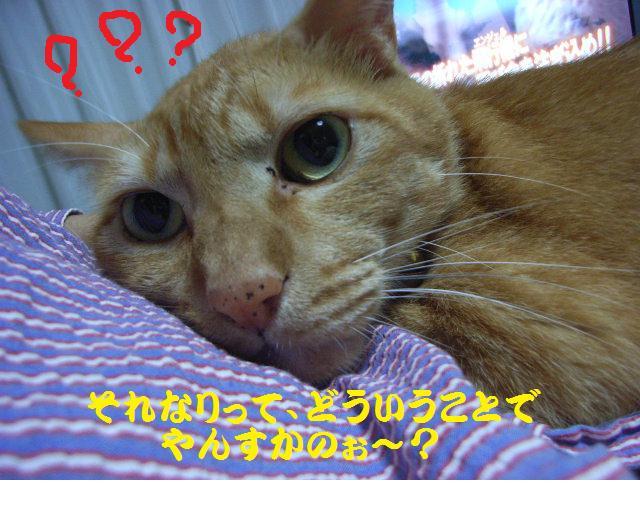 d0081025_20101846.jpg