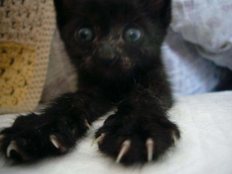 ツイテルthe CAT_b0113743_0183091.jpg