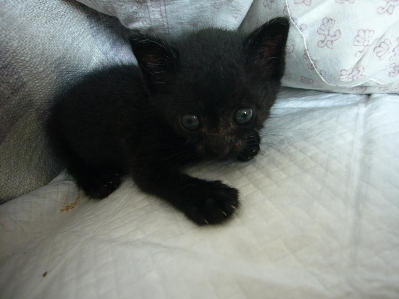 ツイテルthe CAT_b0113743_05954.jpg