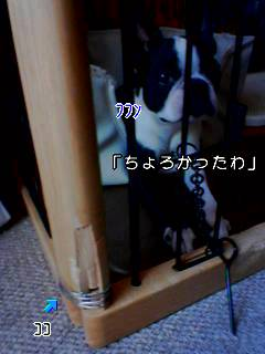 c0110945_1615567.jpg