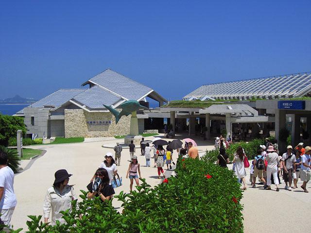 沖縄旅行 5日目、7月29日 美ら海水族館_b0042282_2231223.jpg