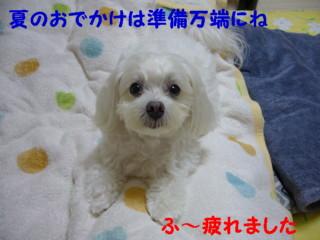 f0145192_15344269.jpg
