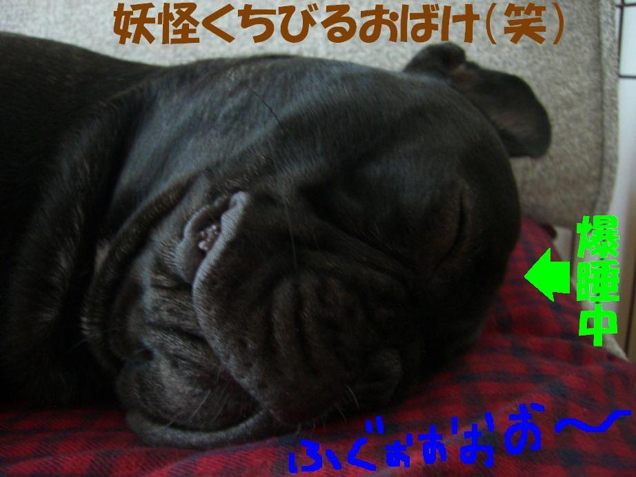 c0113109_23264146.jpg