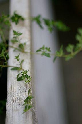グリーンに癒されてます_c0093830_0113830.jpg