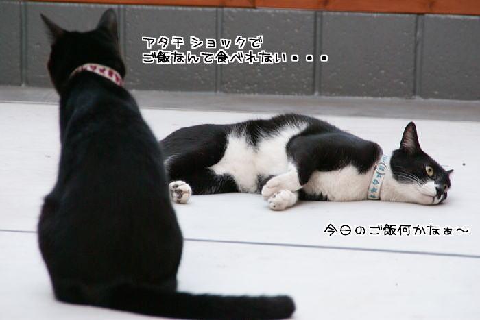 f0142061_731523.jpg