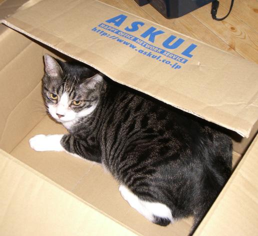 ネコが明日来る_c0066368_22274369.jpg