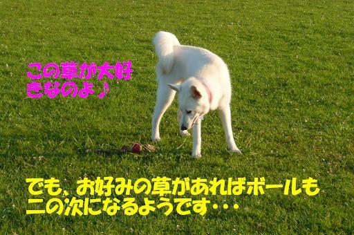f0121712_1481163.jpg
