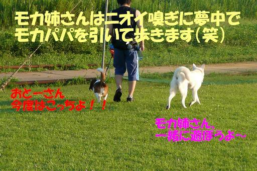 f0121712_1481990.jpg