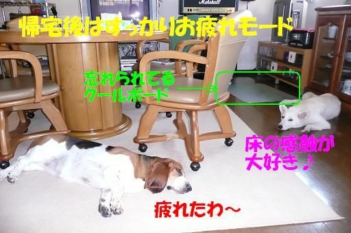 f0121712_1483875.jpg