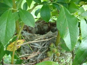 鳥の巣その後 8/9_c0123523_0231922.jpg