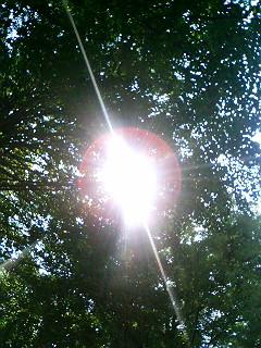 夏の日:8月の予定一部_a0103940_17555787.jpg