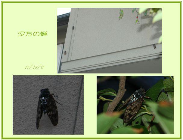 c0051105_23484560.jpg
