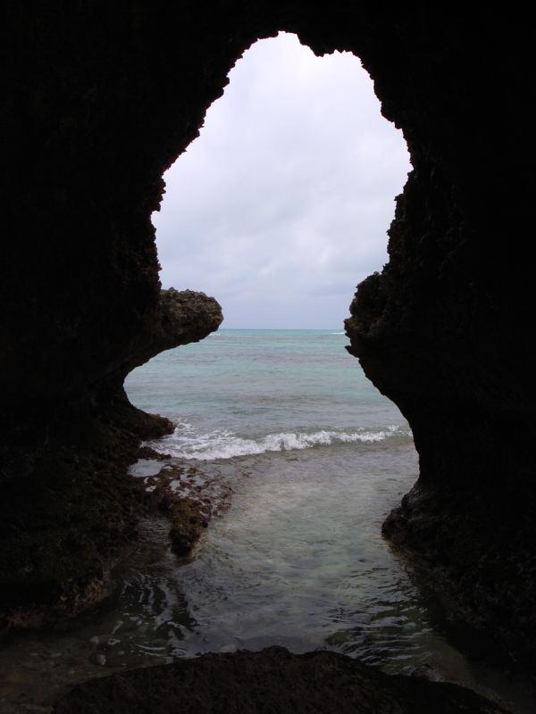 宮古島の生物(爬虫類を含む)_e0004009_01497.jpg