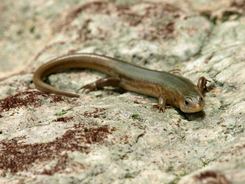 宮古島の生物(爬虫類を含む)_e0004009_044026.jpg