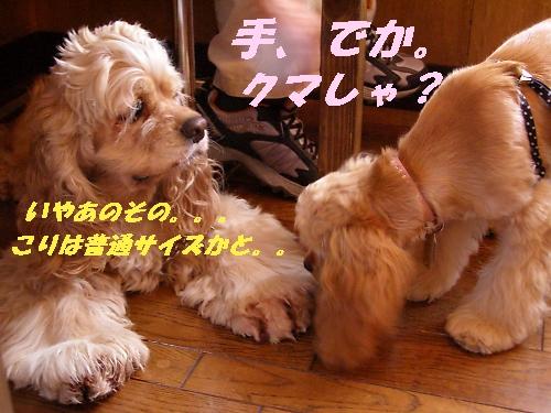 b0067012_1218819.jpg