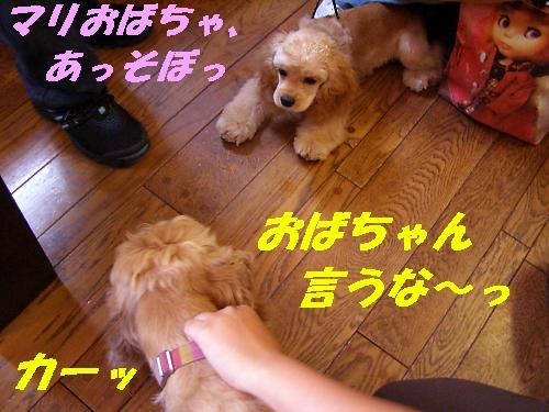 b0067012_123360.jpg