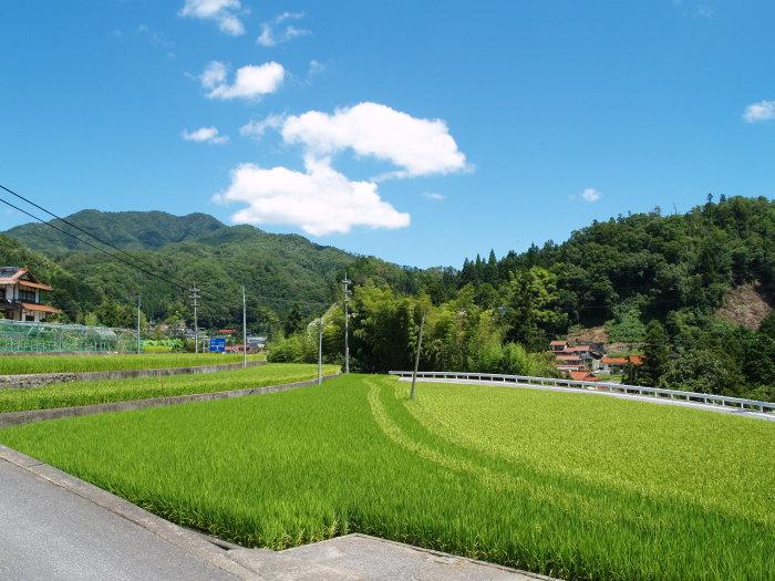 田圃の風景_c0116915_22304159.jpg