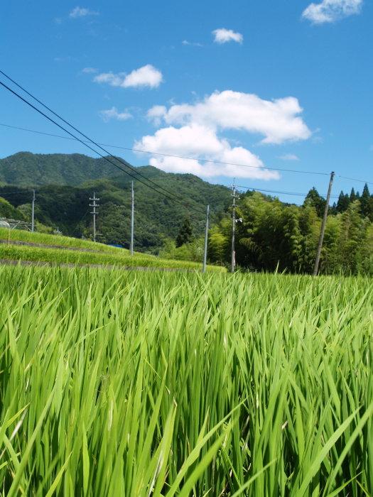 稲など。。_c0116915_2240577.jpg