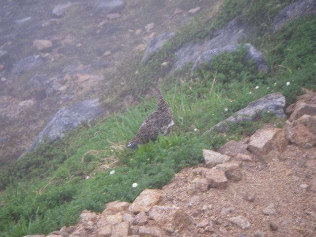 ひとり選考会B(その3)立山から太郎平小屋_f0015348_7131961.jpg