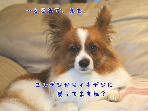 d0013149_255474.jpg