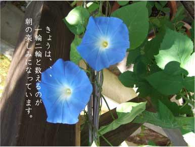 c0029761_8351987.jpg