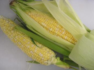 採れたてのトウモロコシ_c0130206_22512659.jpg