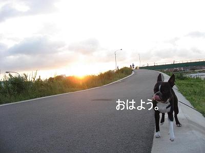 朝散歩のすすめ。_f0141516_23521797.jpg