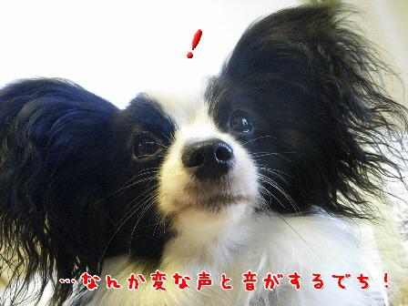 d0013149_0423262.jpg