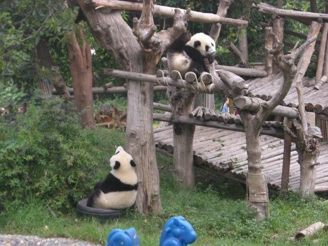 中国、四川省、三奥雪山登山報告  参加11名。_d0007657_198667.jpg